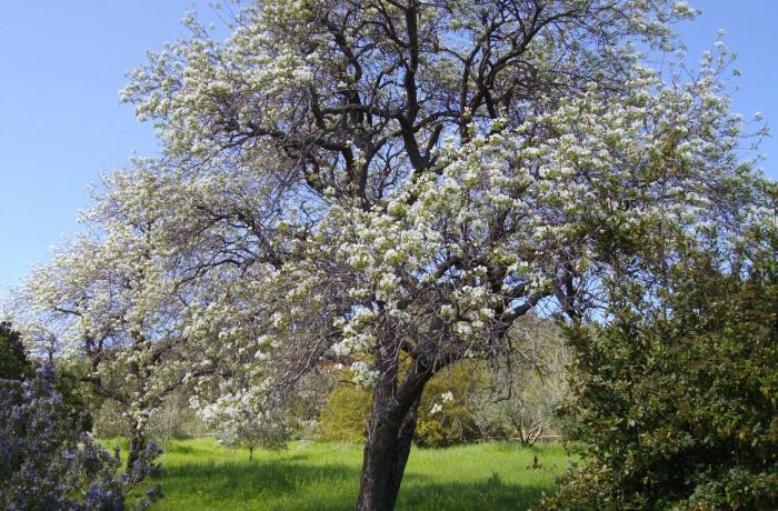 Dolce Primavera all'Elba